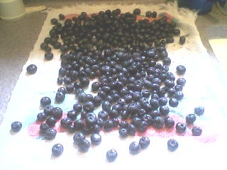 Freezing blueberries.2