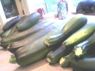 Zucchinis.2
