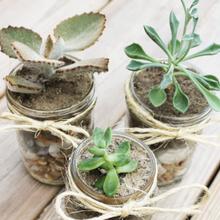 2succulents