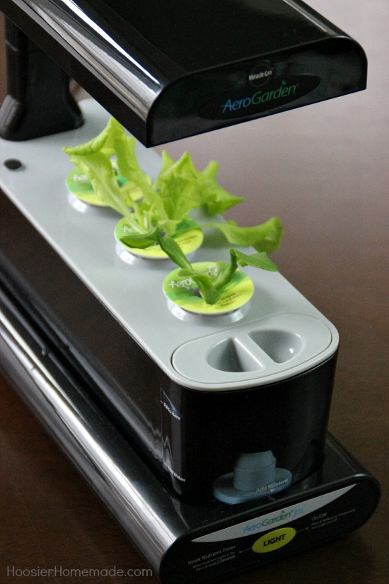 Aerogarden Indoor Garden Aerogarden 3sl indoor garden review hoosier homemade aerogarden 3sl indoor garden system it doesnt get an easier than this to workwithnaturefo