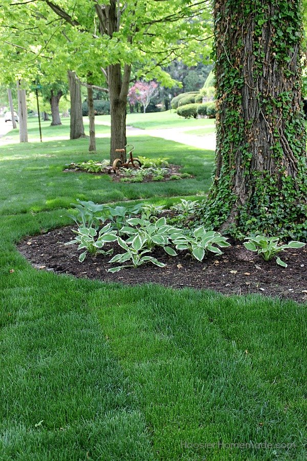 Do you dream of having a beautiful lawn? Learn the Basics to Fertilizing your Lawn from an expert! It's easy and YOU can do it too!