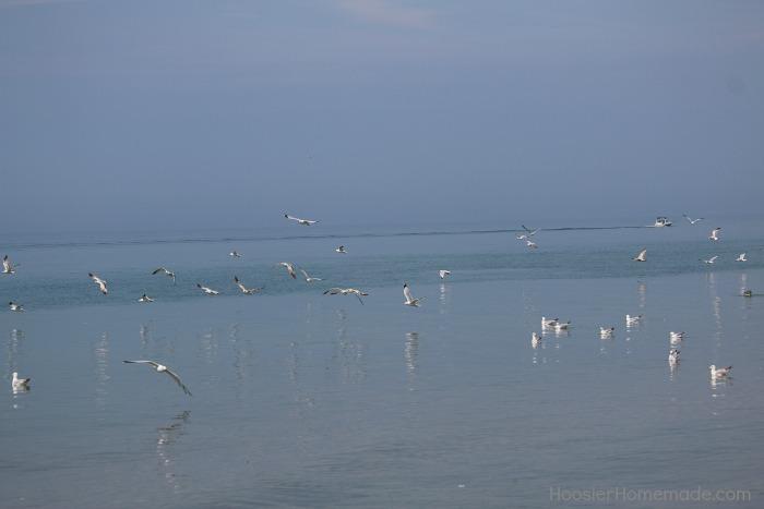 Beach.birds