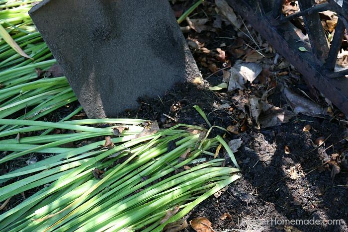 Daffodils.dig