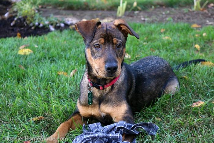Dog-Toy-Bucky