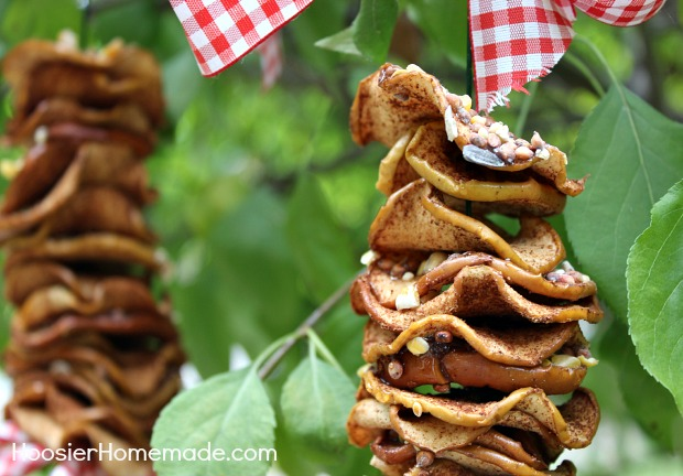 Dried Apple Bird Feeder