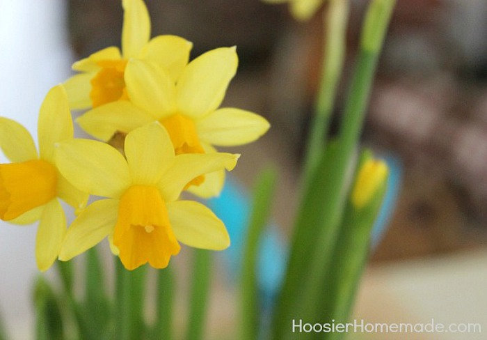 Daffodils for Easter Flower Basket Centerpiece