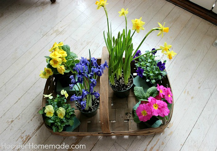 Flowers to add to Easter Basket