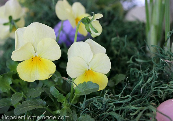 Pansies for Easter Flower Basket Centerpiece