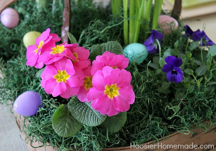 Primrose for Easter Flower Basket Centerpiece