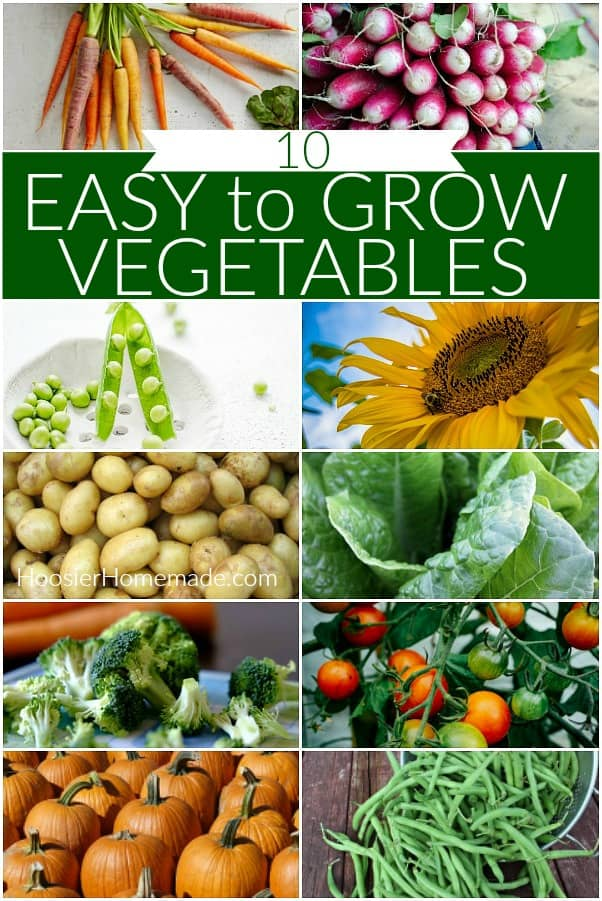 Vegetable to grow