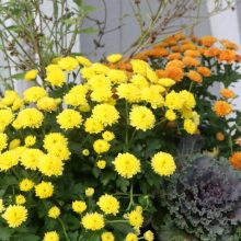 fall-planter-feature