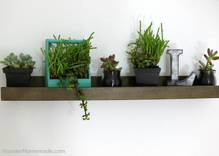 Small succulents on a floating shelf