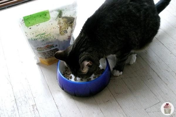 Fresh-Pet-Cat-Food