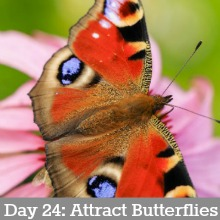 Frugal-Ways-to-Attract-Butterflies.Day24
