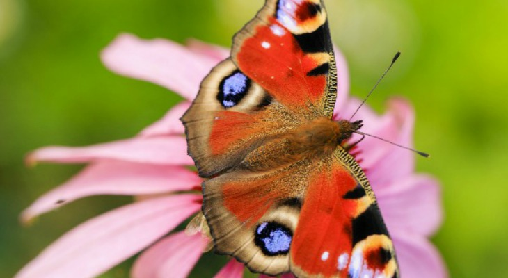 Frugal Ways To Attract Butterflies To Your Garden: Spring