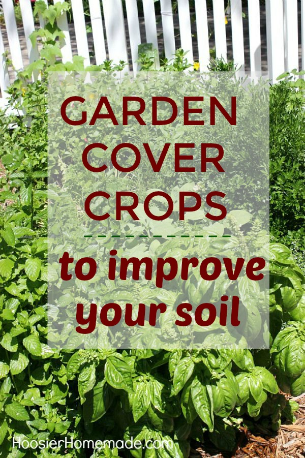 GARDEN COVER CROPS TO IMPROVE YOUR SOIL -- Learn all about cover crops - what they are, and why you need them!
