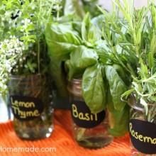 Fresh Herbs :: Preserving and Drying :: on HoosierHomemade.com