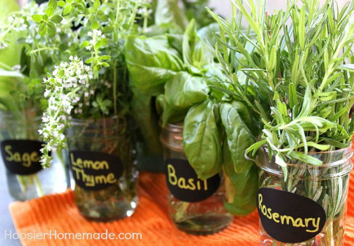 Fresh Herbs Preserving And Drying Hoosier Homemade
