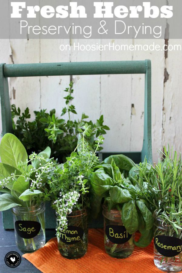 Growing your own herbs is very easy, inexpensive and doesn't require a lot of time. How can you prolong their life? Let's learn how to Preserve and Dry Fresh Herbs, click on the Photo for Instructions.