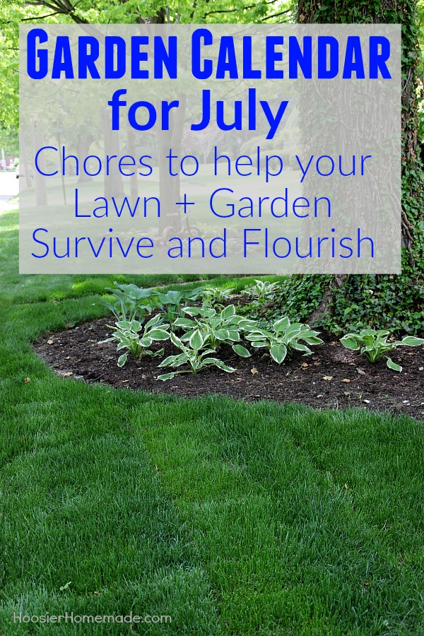 The Garden Calendar for July is packed with chores that will make your lawn and garden survive and flourish during the summer heat that comes along with the summer months. It will also set you up for a beautiful fall.