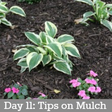 Mulch.Day11