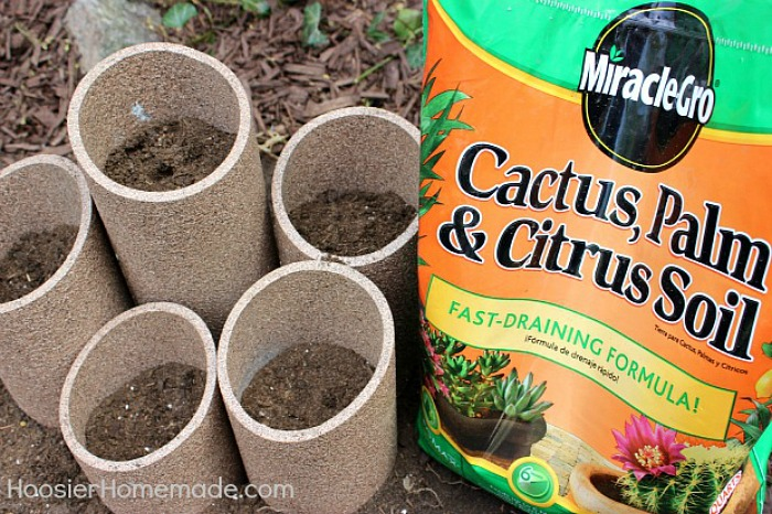 Cactus Soil Then Fill With Miracle Gro