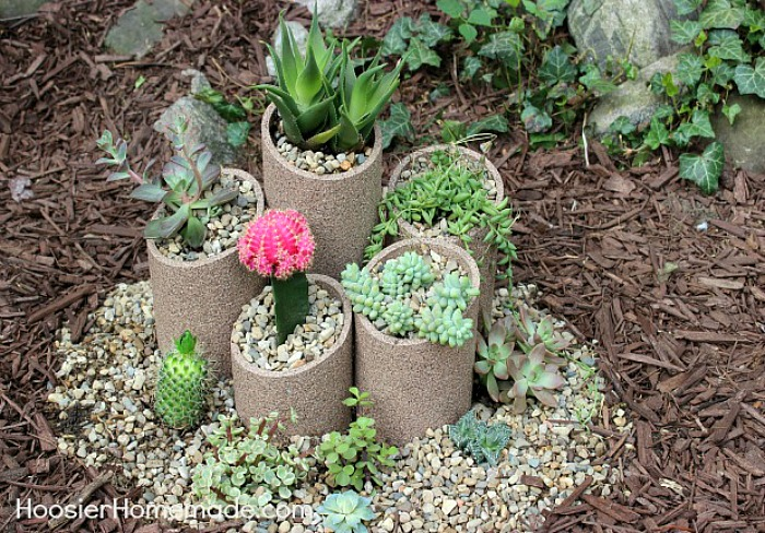 How to Build and Plant a Succulent Garden