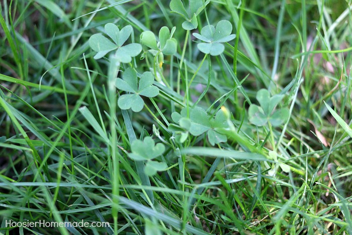 7 Common Weeds With Identification Pictures Hoosier Homemade