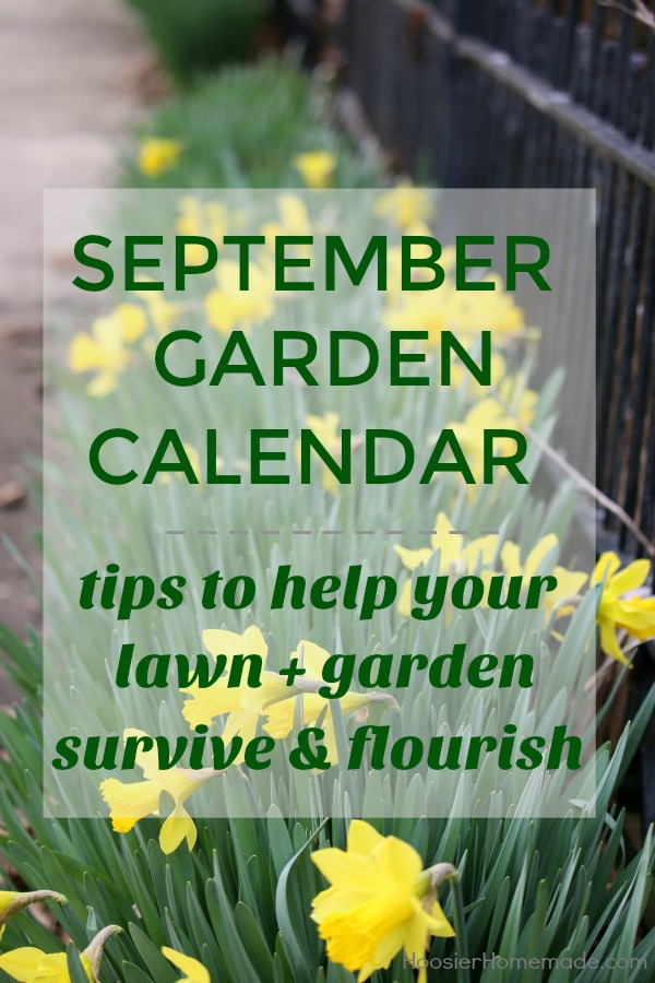SEPTEMBER GARDEN CALENDAR is packed with chores that will make your lawn + garden survive and flourish! Get your lawn ready for winter! Plant Spring Bulbs! And more!