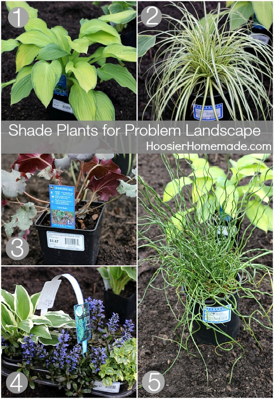 Shade Plants for Problem Landscapes | HoosierHomemade.com