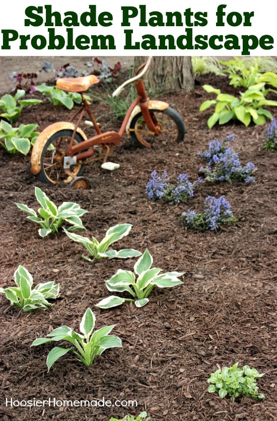 Shade Plants for Problem Landscape | on HoosierHomemade.com