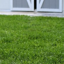 Tips for Laying Sod during the Summer
