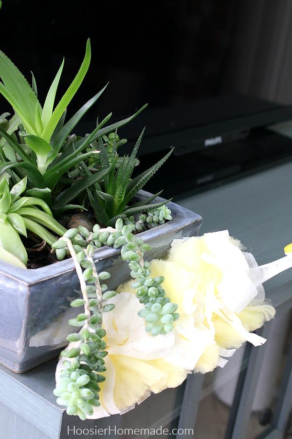 Dust House Plants