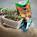 Succulent Gardens: DIH Workshop at The Home Depot