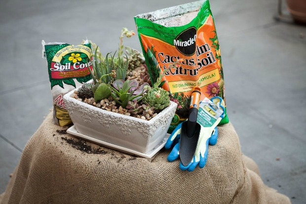 Succulent Gardens: DIH Workshop at The Home Depot