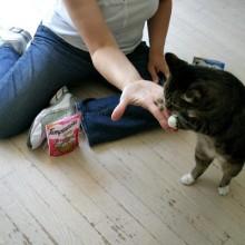 Temptations-Cat-Treats.Kali