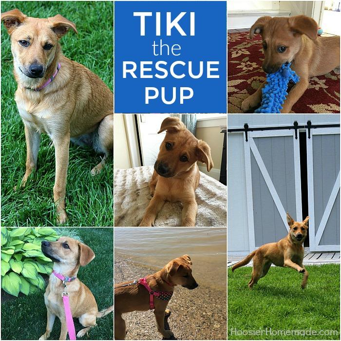Tiki the Rescue Pup