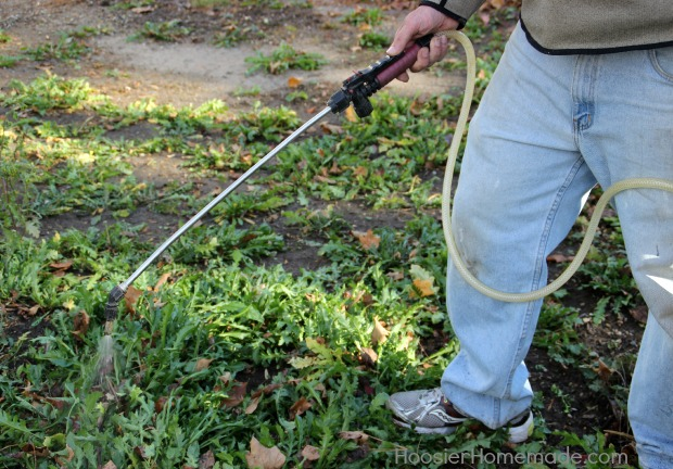 Spray your yard for weed control