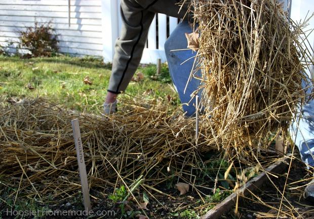 Spread straw on plants