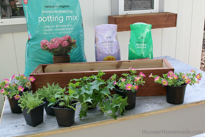 WINDOW BOX -- How to Plant a Window Box