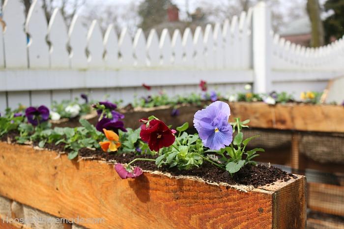 Pansies brighten up a Wooden Pallet Compost Bin