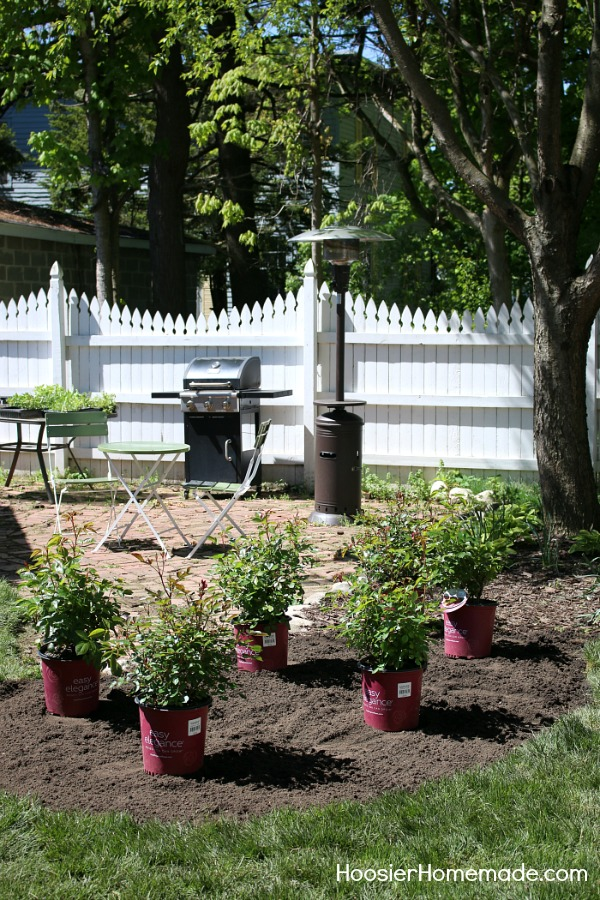 How To Design A Small Rose Garden Hoosier Homemade