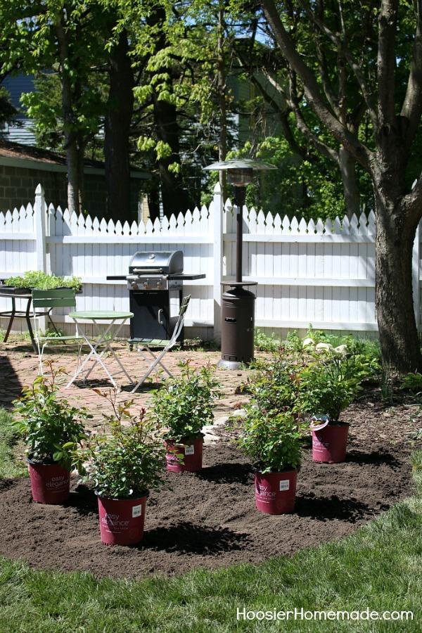 How to design a small rose garden hoosier homemade for Small rose garden plans