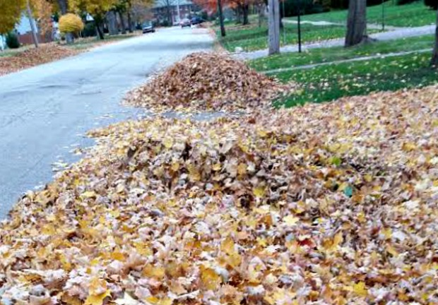 Clean up leaves