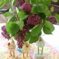lilacs.3