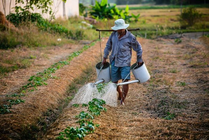 Man watering the garden